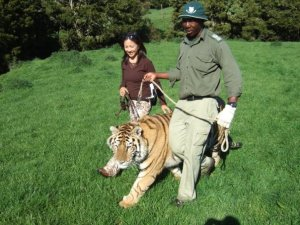 """Walking with tiger"""